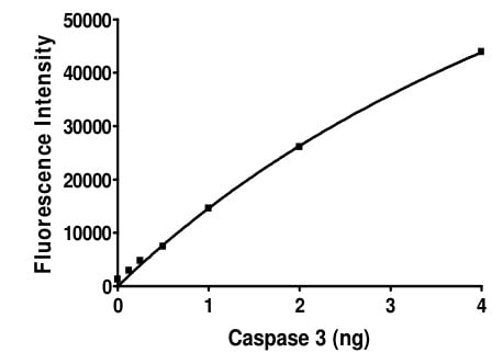 Functional Studies - Recombinant human Cleaved Caspase-3 protein (ab198447)
