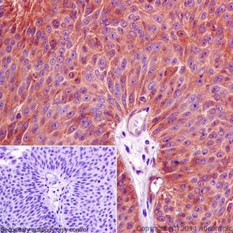 Immunohistochemistry (Formalin/PFA-fixed paraffin-embedded sections) - Anti-PPP2R5E antibody [EPR17147] - C-terminal (ab198500)