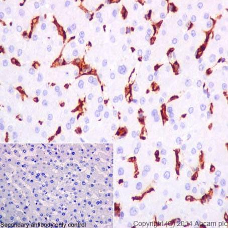 Immunohistochemistry (Formalin/PFA-fixed paraffin-embedded sections) - Anti-CD16 antibody [EPR16784] - C-terminal (ab198507)