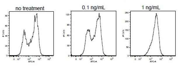 Functional Studies - Recombinant human IL-8 protein (ab198561)