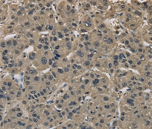 Immunohistochemistry (Formalin/PFA-fixed paraffin-embedded sections) - Anti-IMPAD1 antibody (ab198839)