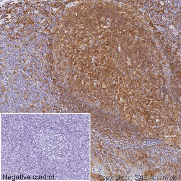 Immunohistochemistry (Formalin/PFA-fixed paraffin-embedded sections) - HRP Anti-Syk antibody [EP573Y] (ab198940)