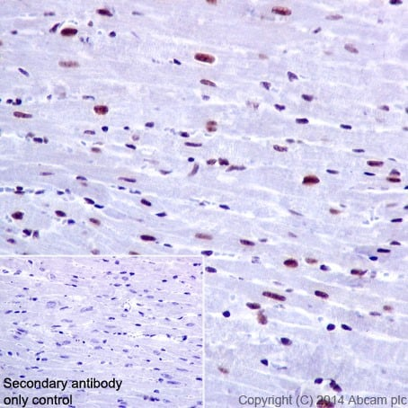 Immunohistochemistry (Formalin/PFA-fixed paraffin-embedded sections) - Anti-PRPF4 antibody [EPR17207] - C-terminal (ab198998)