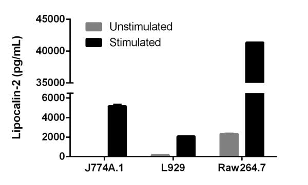 Comparison of secreted Lipocalin-2 in mouse cell lines with or without stimulation.