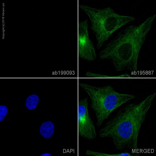 Immunocytochemistry/ Immunofluorescence - Rabbit IgG, monoclonal [EPR25A] - Isotype Control (Alexa Fluor® 647) (ab199093)