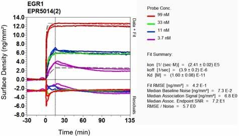 Other - Anti-Egr1 antibody [EPR5014(2)] - BSA and Azide free (ab199248)