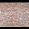 Immunohistochemistry (Formalin/PFA-fixed paraffin-embedded sections) - Anti-BAP1 antibody (ab199396)