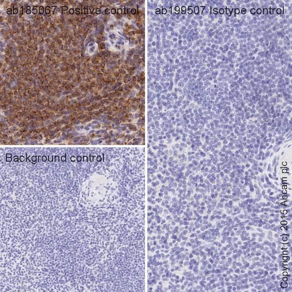Immunohistochemistry (Formalin/PFA-fixed paraffin-embedded sections) - Rabbit IgG, monoclonal [EPR25A] - Isotype Control (HRP) (ab199507)