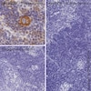 Immunohistochemistry (Formalin/PFA-fixed paraffin-embedded sections) - HRP Rabbit IgG, monoclonal [EPR25A] - Isotype Control (ab199507)