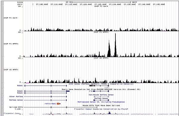 ChIP - Anti-NFAT1 antibody [25A10.D6.D2] - ChIP Grade (ab2722)