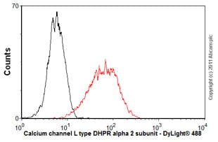 Flow Cytometry - Anti-Calcium channel L type DHPR alpha 2 subunit/CACNA2D1 antibody [20A] (ab2864)