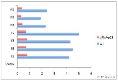 ChIP - Anti-gamma H2A.X (phospho S139) antibody - ChIP Grade (ab2893)