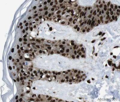 Immunohistochemistry (Formalin/PFA-fixed paraffin-embedded sections) - Anti-hnRNP U/p120 antibody (ab20666)