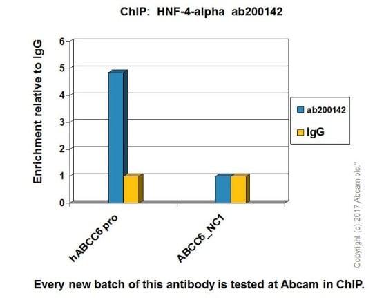 ChIP - Anti-HNF-4-alpha antibody [EPR19265-130] - ChIP Grade (ab200142)