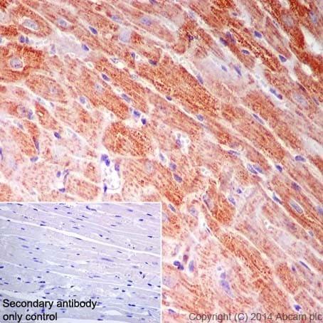 Immunohistochemistry (Formalin/PFA-fixed paraffin-embedded sections) - Anti-NDUFB9 antibody [EPR15955-78] (ab200198)