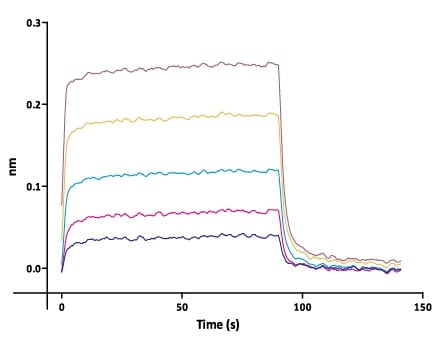 Functional Studies - Recombinant human ErbB 2 (biotinylated ) protein (Biotin) (ab200500)