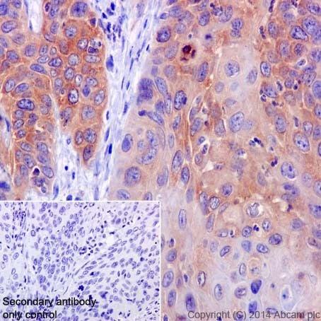 Immunohistochemistry (Formalin/PFA-fixed paraffin-embedded sections) - Anti-A RAF antibody [EPR16208] (ab200653)