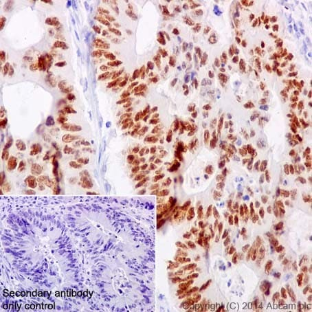 Immunohistochemistry (Formalin/PFA-fixed paraffin-embedded sections) - Anti-HNF-4-alpha antibody [EPR16787] (ab200654)