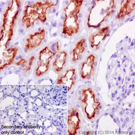 Immunohistochemistry (Formalin/PFA-fixed paraffin-embedded sections) - Anti-Tmem27 antibody [EPR17748] (ab200664)