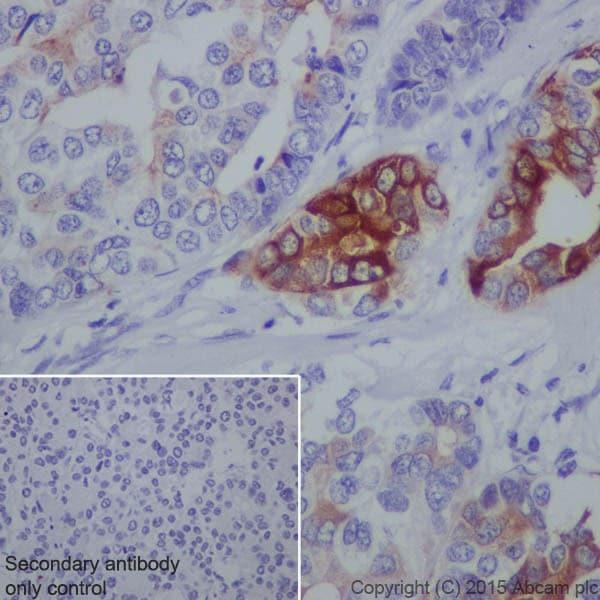 Immunohistochemistry (Formalin/PFA-fixed paraffin-embedded sections) - Anti-Trypsin antibody [EPR19498] (ab200997)