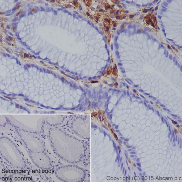 Immunohistochemistry (Formalin/PFA-fixed paraffin-embedded sections) - Anti-Annexin-6/ANXA6 antibody [EPR19517] (ab201023)