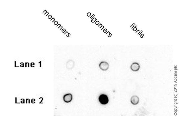 Dot Blot - Anti-vascular Amyloid 1-42 antibody [mOC31] - Conformation-Specific (ab201059)