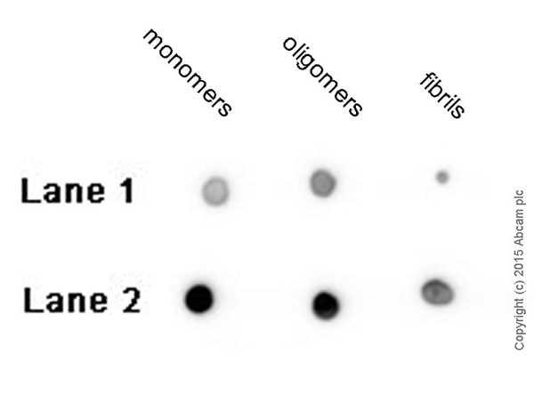 Dot Blot - Anti-beta Amyloid 1-42 antibody [mOC64] - Conformation-Specific (ab201060)