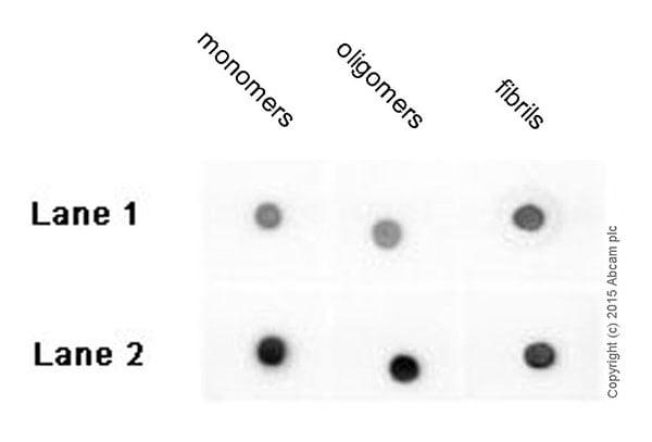 Dot Blot - Anti-beta Amyloid 1-42 antibody [mOC98] - Conformation-Specific (ab201061)