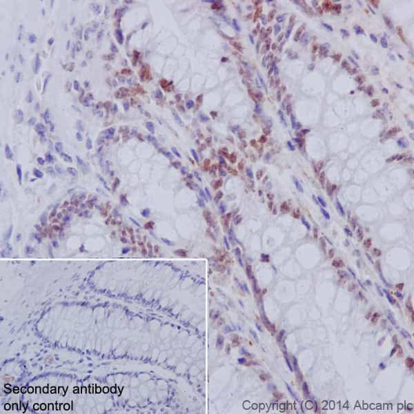 Immunohistochemistry (Formalin/PFA-fixed paraffin-embedded sections) - Anti-HNF-4-alpha antibody [EPR16885-99] (ab201460)