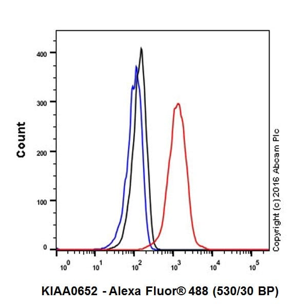 Flow Cytometry - Anti-KIAA0652/ATG13 antibody [EPR19601] (ab201467)