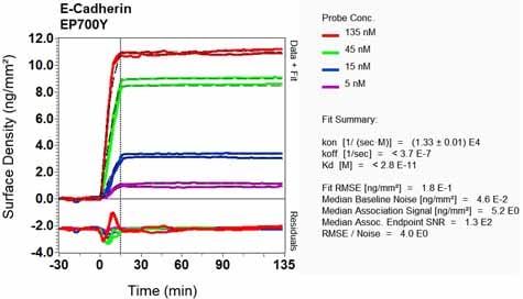 OI-RD Scanning - Anti-E Cadherin antibody [EP700Y] - Low endotoxin, Azide free (ab201499)