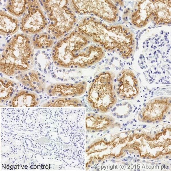 Immunohistochemistry (Formalin/PFA-fixed paraffin-embedded sections) - Biotin Anti-Syntaxin 3 antibody [EPR8543] (ab201528)