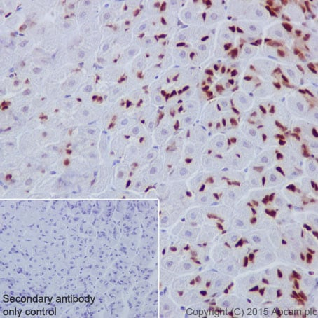 Immunohistochemistry (Formalin/PFA-fixed paraffin-embedded sections) - Anti-MCM6 antibody [EPR17686] (ab201683)