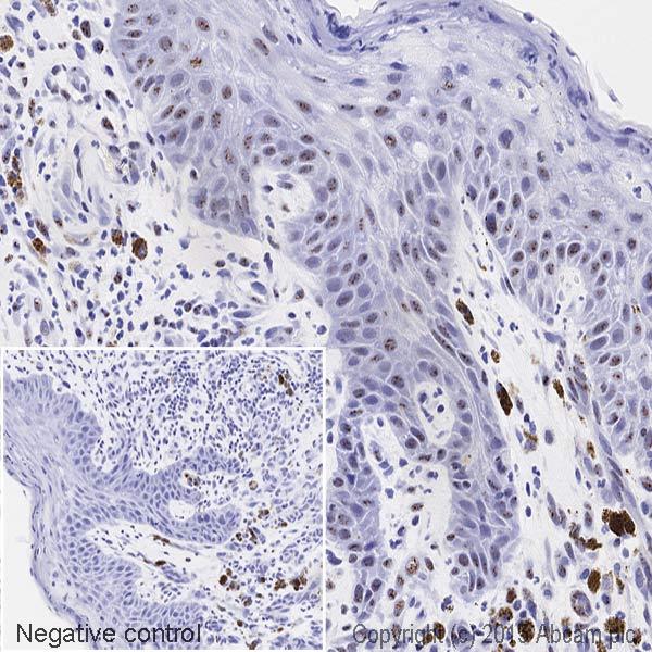 Immunohistochemistry (Formalin/PFA-fixed paraffin-embedded sections) - HRP Anti-SF3a66 antibody [4G8] (ab201747)