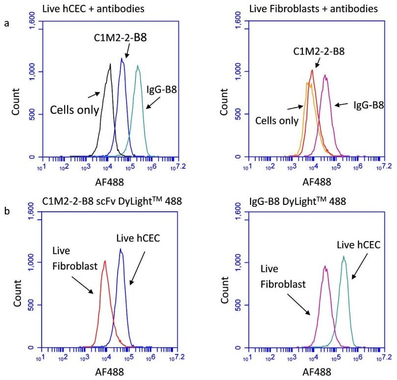 Flow Cytometry - DyLight<sup>&reg;</sup> 488 Conjugation Kit (Fast)&nbsp;- Lightning-Link&reg; (ab201799)