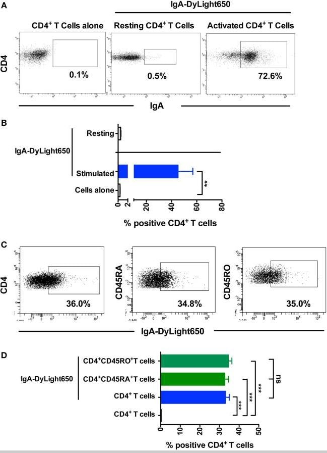 Flow Cytometry - DyLight<sup>&reg;</sup>&nbsp;650 Conjugation Kit (Fast)&nbsp;- Lightning-Link&reg; (ab201803)