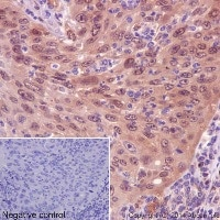 Immunohistochemistry (Formalin/PFA-fixed paraffin-embedded sections) - Anti-IRF3 antibody [EPR2418Y] - BSA and Azide free (ab201809)