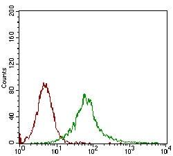 Flow Cytometry - Anti-CamKII gamma antibody [8G10C1] (ab201966)