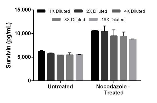 Nocodazole treatment of NIH/3T3 cells stimulates expression of Survivin.