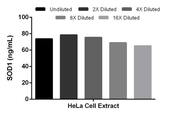 SOD1 levels in HeLa cell extract.