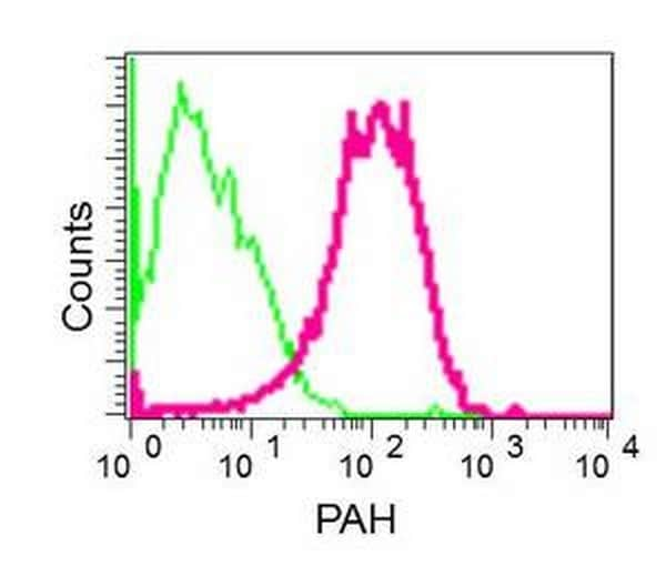 Flow Cytometry - Anti-PAH antibody [EPR12380] - BSA and Azide free (ab202431)