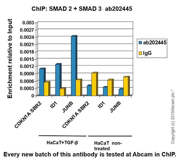 ChIP - Anti-Smad2 + Smad3 antibody [EPR19557-4] - ChIP Grade (ab202445)