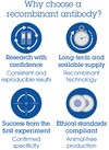 Alexa Fluor® 555 Anti-beta III Tubulin antibody [EP1569Y] - Neuronal Marker (ab202519)