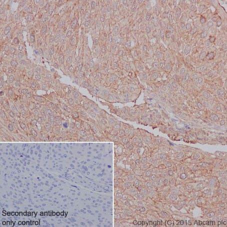 Immunohistochemistry (Formalin/PFA-fixed paraffin-embedded sections) - Anti-SUCLA2 antibody [EPR14924] (ab202582)