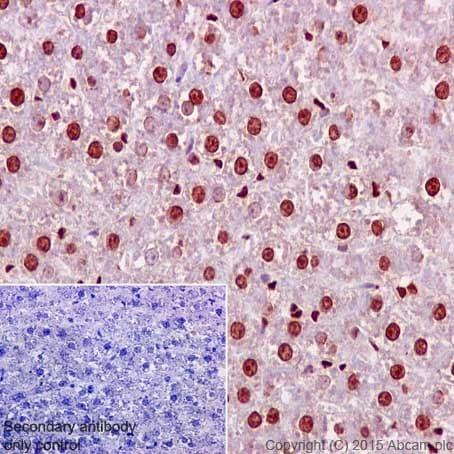 Immunohistochemistry (Formalin/PFA-fixed paraffin-embedded sections) - Anti-Aly/Ref antibody [EPR17942] (ab202894)