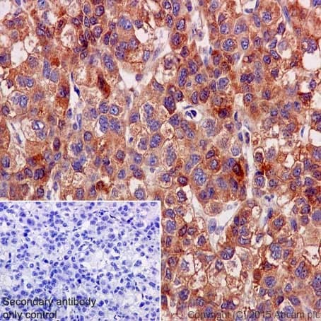 Immunohistochemistry (Formalin/PFA-fixed paraffin-embedded sections) - Anti-OSTF1 antibody [EP15457] (ab202901)