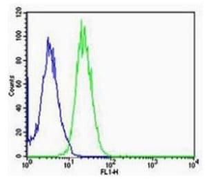 Flow Cytometry - Anti-Arc antibody (ab203056)