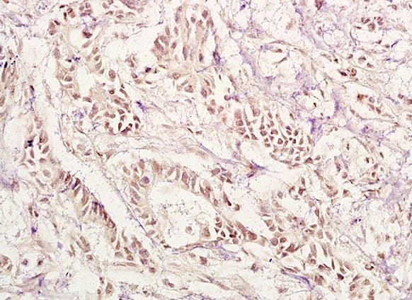 Immunohistochemistry (Formalin/PFA-fixed paraffin-embedded sections) - Anti-PAX1 antibody (ab203065)