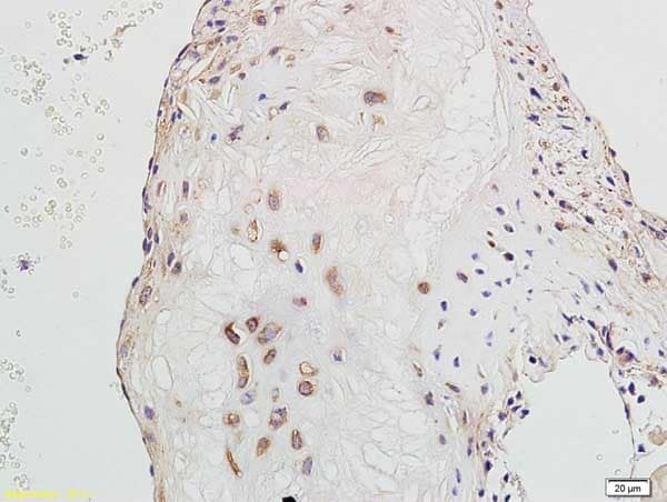 Immunohistochemistry (Formalin/PFA-fixed paraffin-embedded sections) - Anti-GADD45A antibody (ab203090)