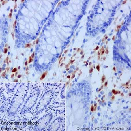 Immunohistochemistry (Formalin/PFA-fixed paraffin-embedded sections) - Anti-BOB1 antibody [EPR17685] (ab203110)
